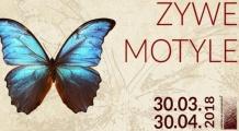 Motyli raj w Poznaniu