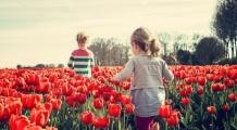 XI Międzynarodowe Targi Tulipanów w Chrzypsku