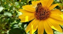 Święto Pszczoły i Obchody Święta Matki Boskiej Zielnej - 15 sierpnia