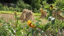 Krystyna Święcicka: Każdy znajdzie na wsi coś dla siebie